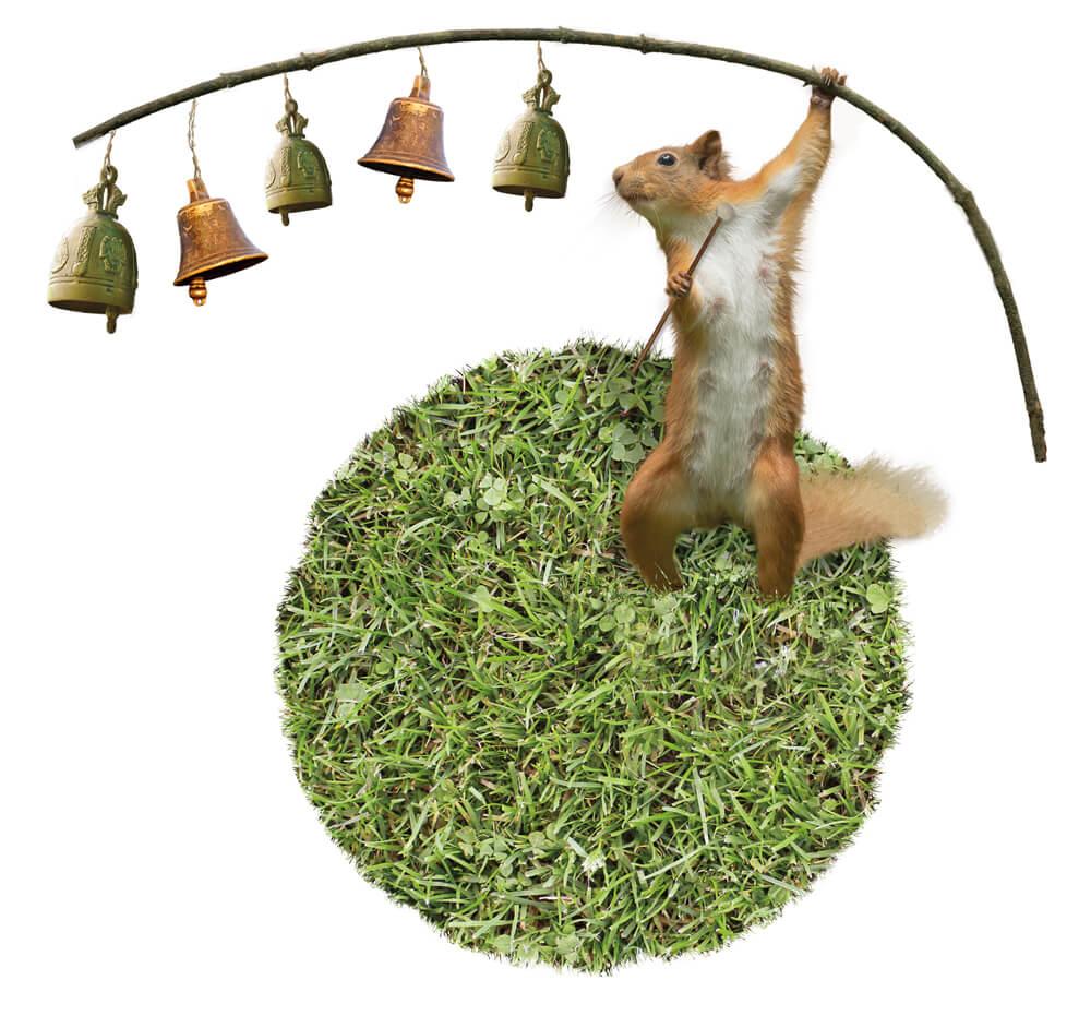 2015 Grasland PieterDeDecker eekhoornbells web