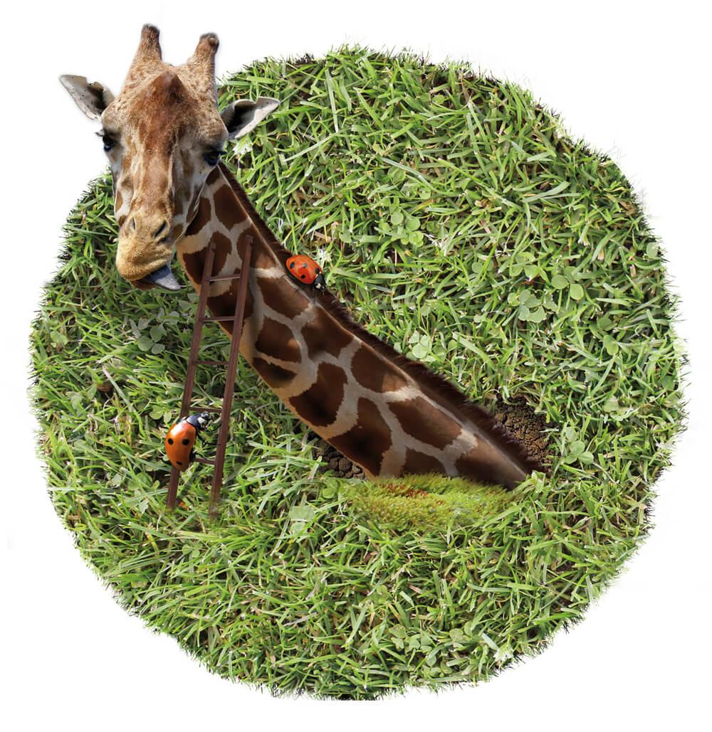 2015 Grasland PieterDeDecker giraffeschuifaf web