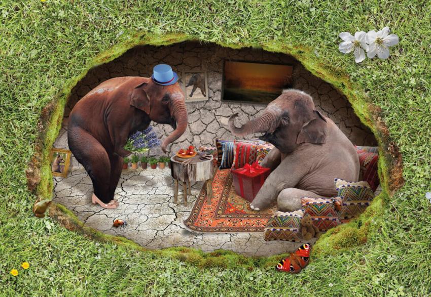 2015 Grasland PieterDeDecker olifantenhuis web