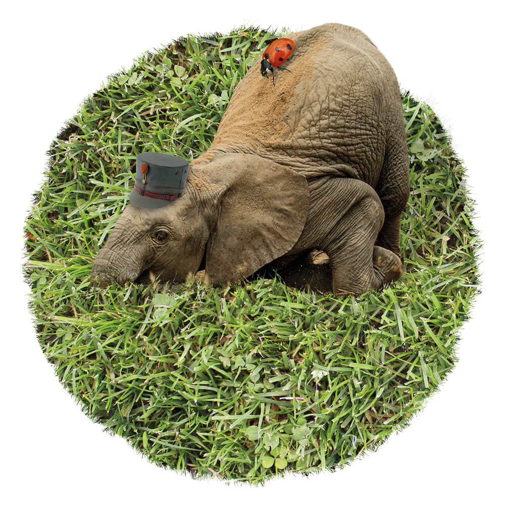 2015 Grasland PieterDeDecker olifantmassage web